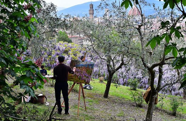 Firenze e il glicine di Ilaria Bertini