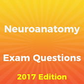 Neuroanatomy Exam Questions