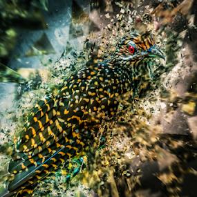 Bird meets glass by Ray Shiu - Digital Art Animals ( derivative, digital art, glass, artistic, fine art, rendition, shatter, birds, composite, render,  )