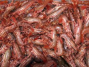 Photo: Fresh Spot Shrimp