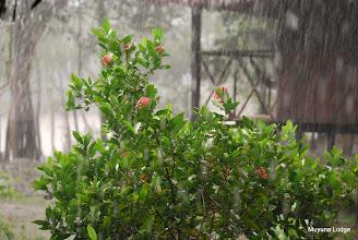 Photo: rain / lluvia