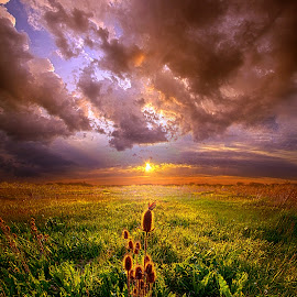 Let Me Not Wander by Phil Koch - Landscapes Prairies, Meadows & Fields ( vertical, wisconsin, ray, yellow, travel, landscape, photography, sun, life, sky, emotions, weather, horizons, light, office, clouds, heaven, colors, art, twilight, mood, journey, horizon, scenic, living, country, field, blue, sunset, outdoors, meadow, beam, lines, sunrise )