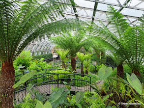 Photo: Dull outside but not in the Winter Gardens