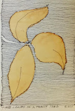 """Photo: """"Three Leaves on a Family Tree"""", 5x7, ink, coffee, on paper"""