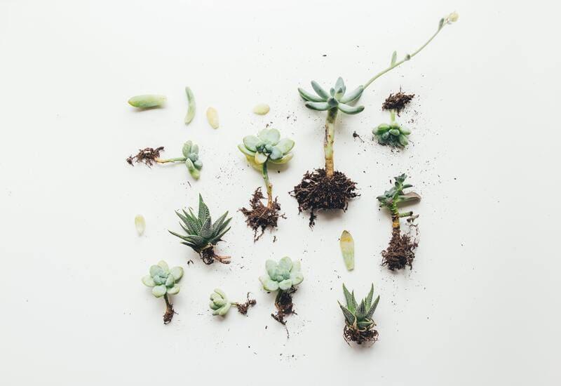 Plusieurs plantes