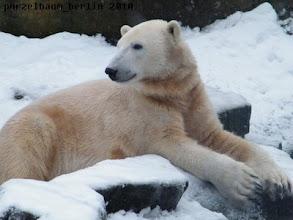 Photo: Knut hat die Eisbaerenruhe weg :-)