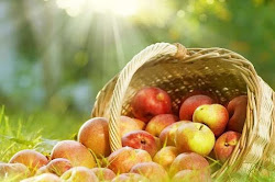 basket of apples laid on a field of grass