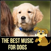 The Best Music for Dogs – Happy Animal, New Age Music for Puppy & Kitty, Music for Cats to Calm Down, Relaxing Music for Your Pet, Calm Your Anxious Dog, Nature Sounds for Relaxation