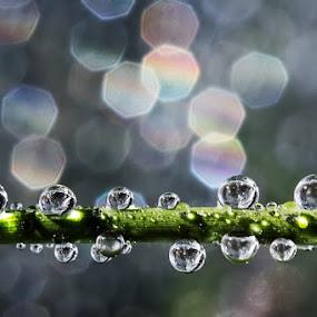 Glowing by Ahmad Soedarmawan - Nature Up Close Water