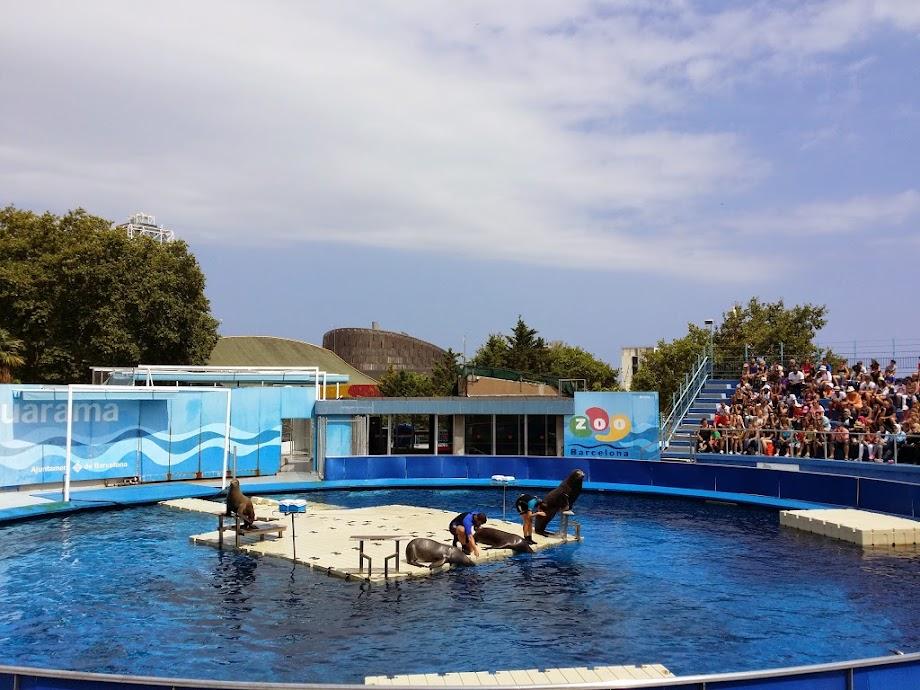 Foto Zoo Barcelona 7