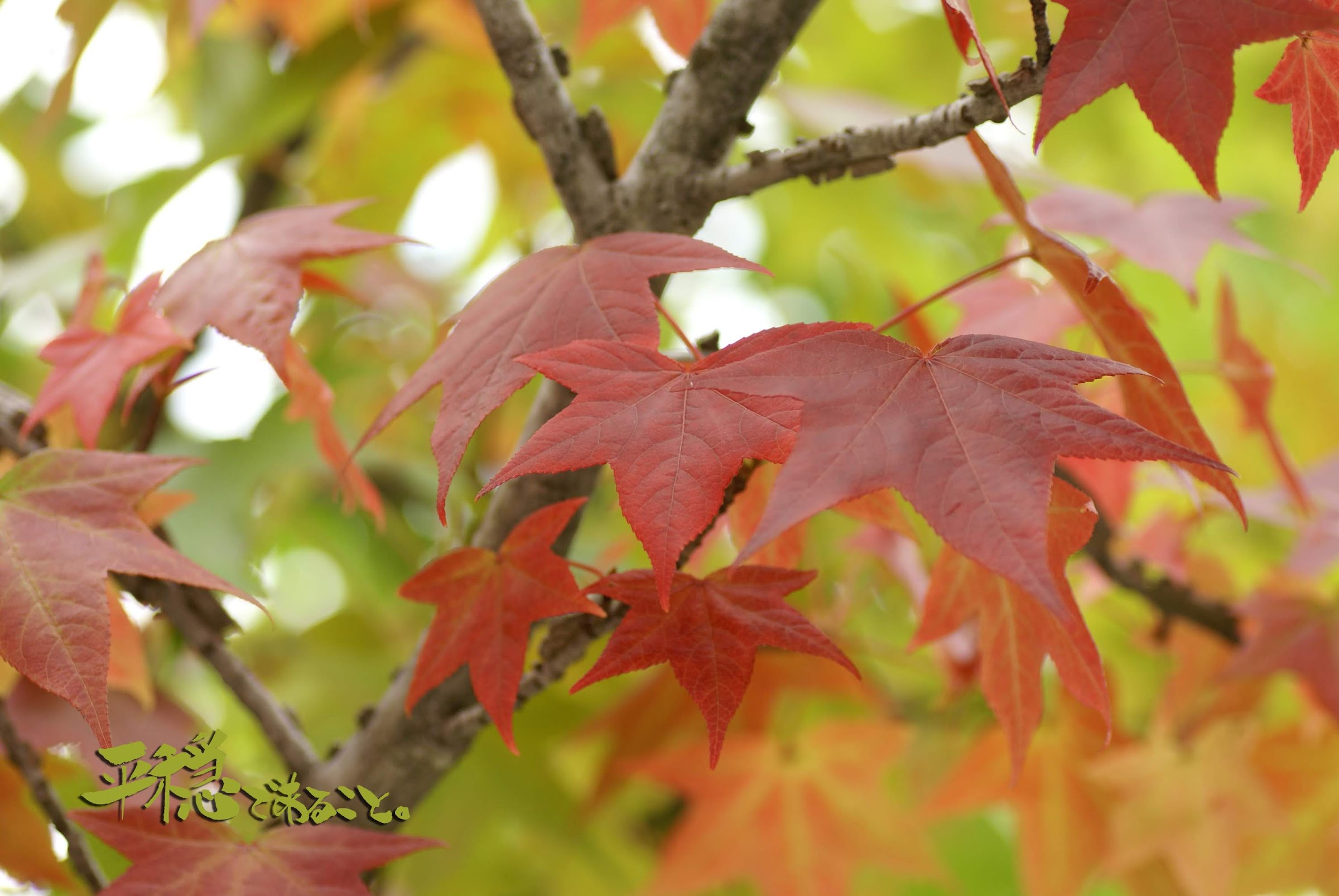 徐々に紅葉