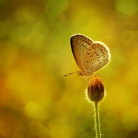 Warm by Anton Wahyudi - Animals Insects & Spiders