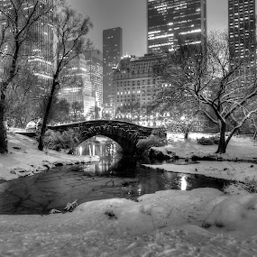 Central Park Blizzard by Chad Weisser - Landscapes Starscapes ( manhattan, nyc, new york, blizard, garyfonglandscapes, holiday photo contest, photocontest,  )