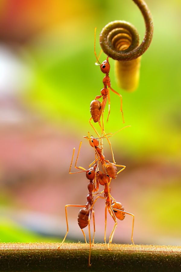 up & up by Patricius Hartono - Animals Insects & Spiders