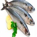 생선 지식 테스트 - 생선이름 맞추기 icon