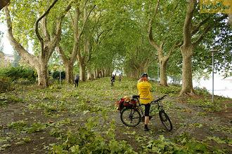 Photo: Чаще всего люди не любят плохую погоду. С другой стороны после дождя появляется радуга, после ливня особо ярко воспринимаются краски, а после бури случаются сюрпризы. Утром, выехав после сильного дождя, мы попали на платановую аллею, устланную листьями, которые сорвал ветер.  Место съемки: Португалия Поездка: велотур «По пути Сантьяго» Автор: Александр Любенко