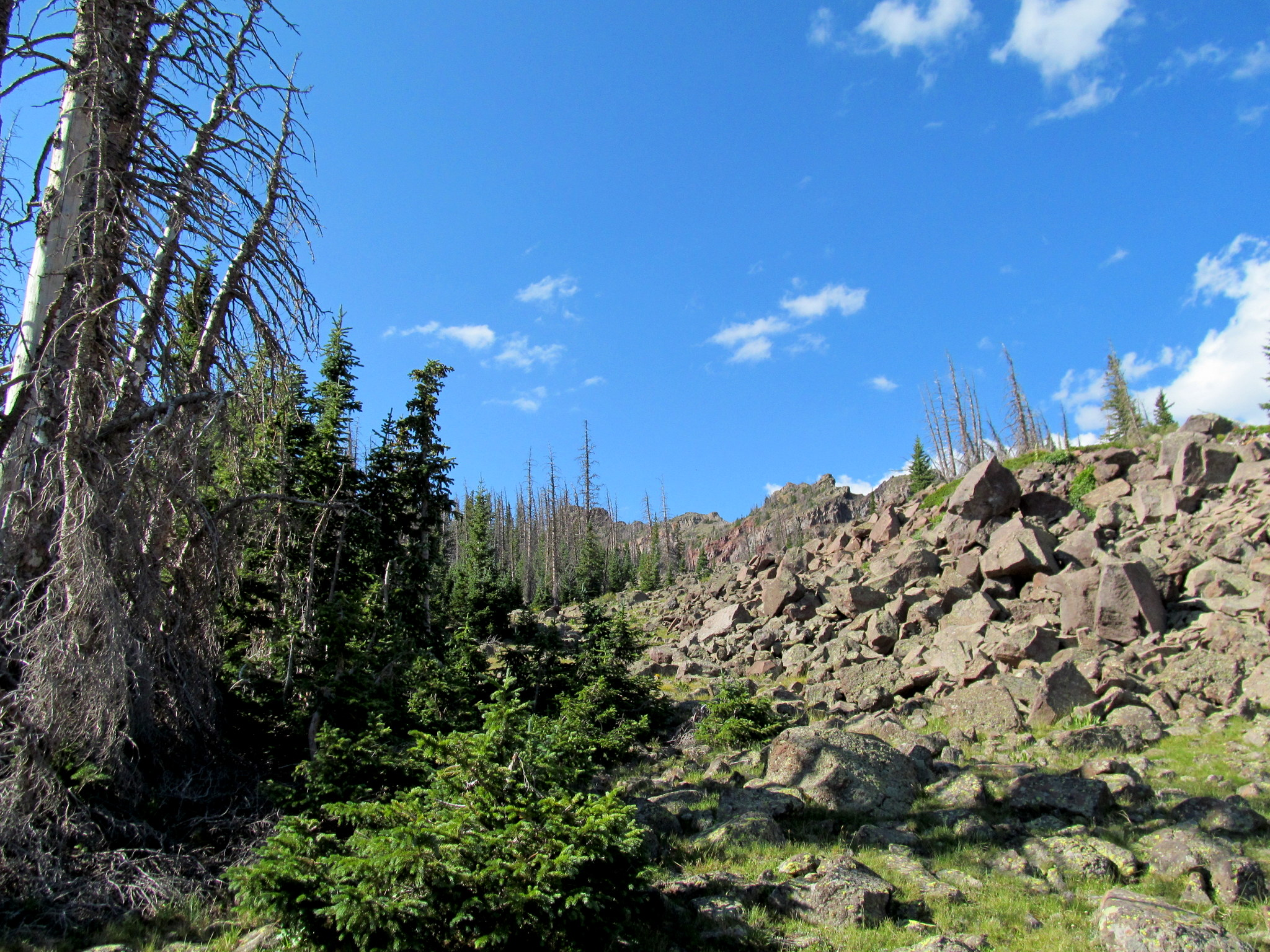 Photo: End of the logging road, beginning of the boulder hopping and bushwhacking