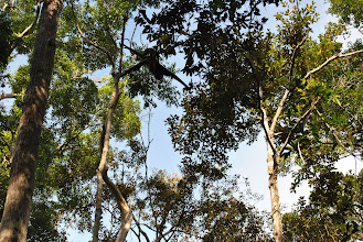 Photo: CAMP LEAKEY gibbone