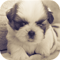 Cute Dogs Wallpaper icon