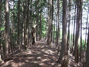 植林帯のよく歩かれた道
