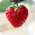Strawberry Pack 2 Wallpaper icon