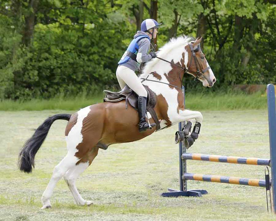 clear round by Sam Smith - Animals Horses ( horse, show jumping, fences )