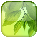 Leaf Live Wallpaper icon