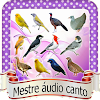 Audio mestre de pássaros