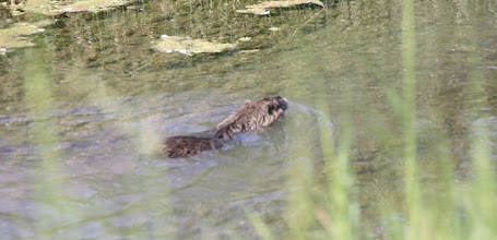 Photo: Day 28 - The Otter!