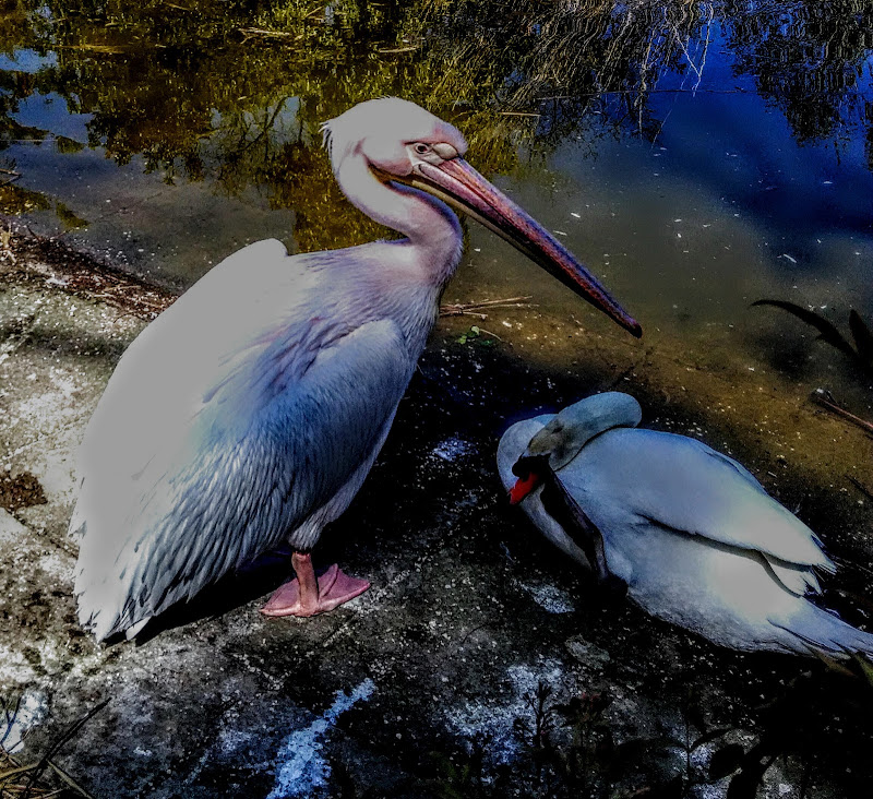 Uccelli di Silbig