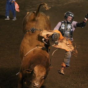 8 seconds by Justin Quinn - Sports & Fitness Rodeo/Bull Riding