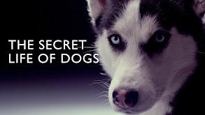Secret Life of Dogs thumbnail