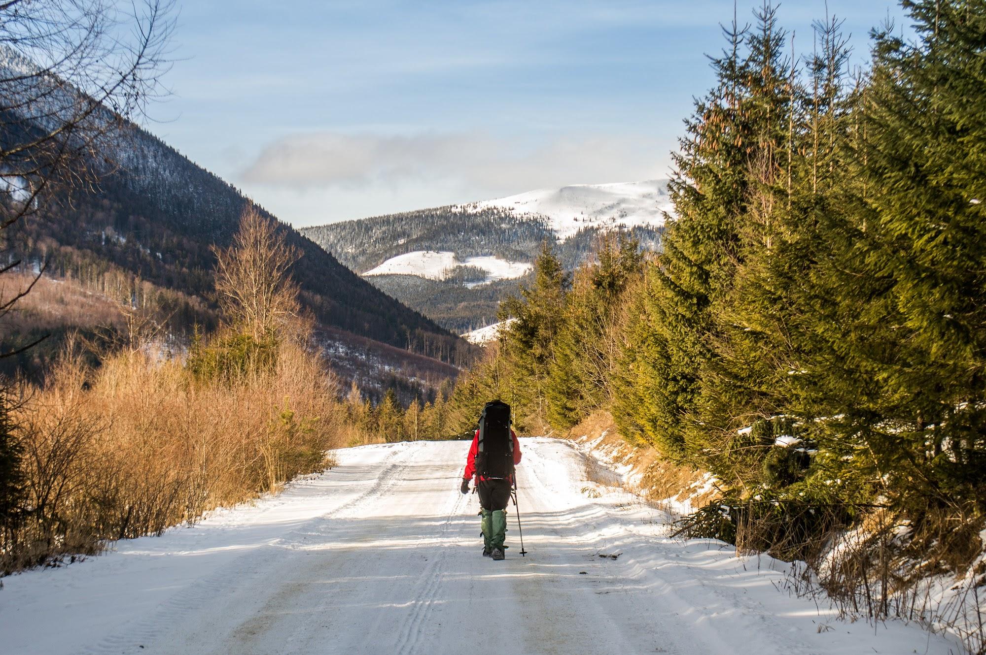 дорога до мшанського лісництва