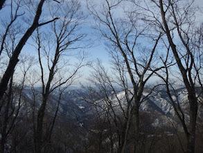 樹林越しに景色