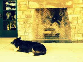Photo: Work dog sitting by a fireplace at Cox Arboretum and Gardens in Dayton, Ohio.