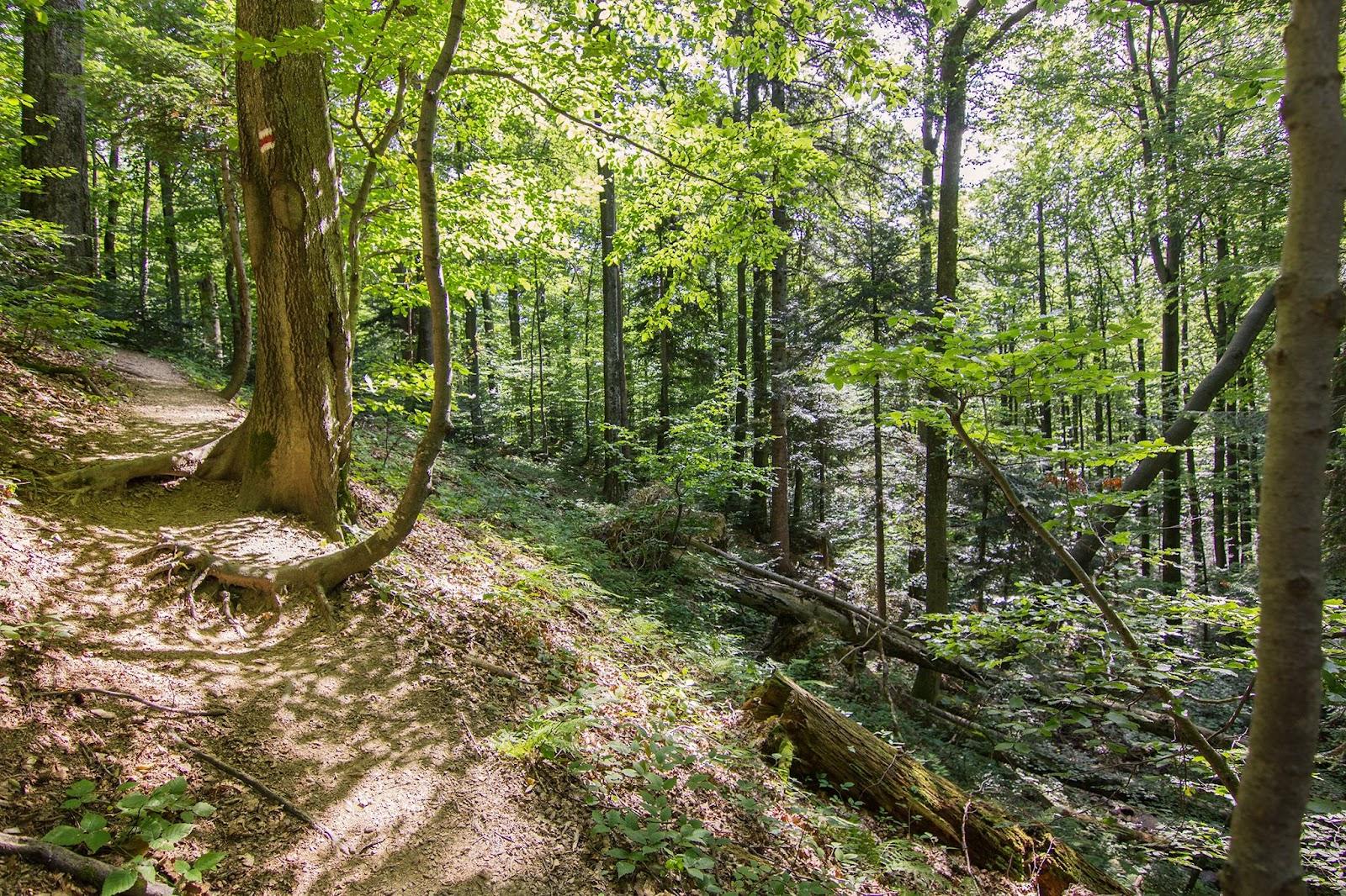 Príroda Polonín
