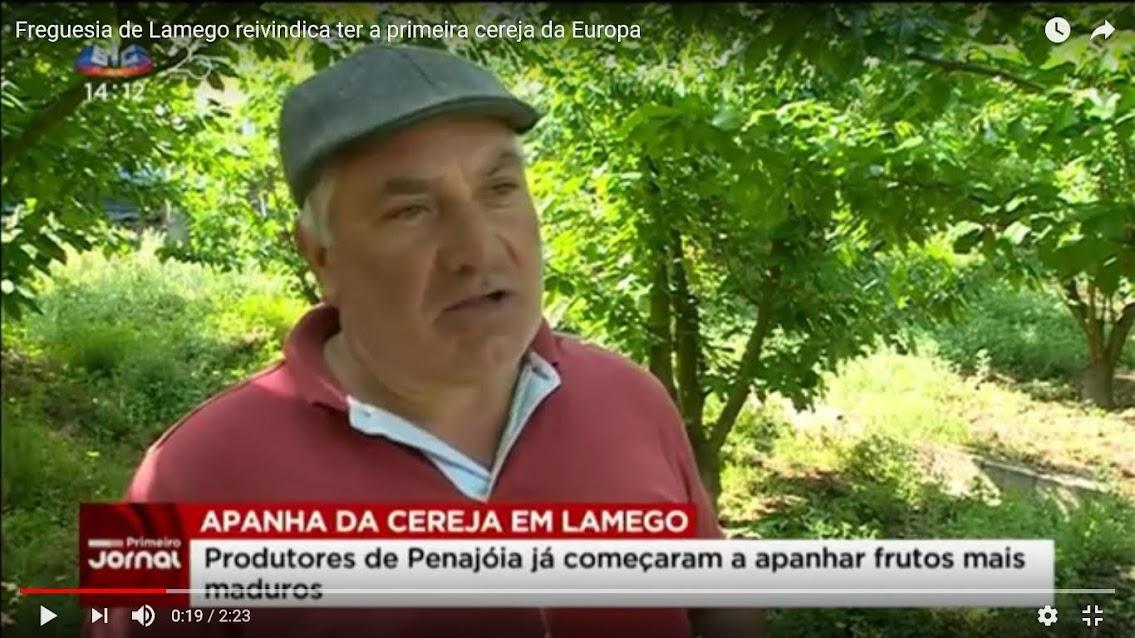 Vídeo - Freguesia de Lamego reivindica ter a primeira cereja da Europa