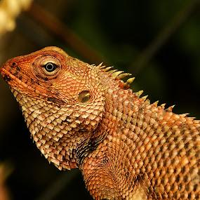 Lizard by Vasanth Photographer - Animals Reptiles ( reptiles, lizard, scales, reptile, animal,  )