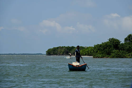 Sri. Lanka Wilpattu National Park . Fishermen between the bay and the mangroves