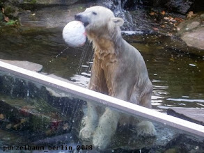 Photo: Spassbaerchen Knut :-)