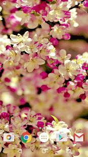 Sakura Živé Tapety - náhled