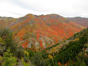 Photo: Vista of the north side of Mill Creek Canyon