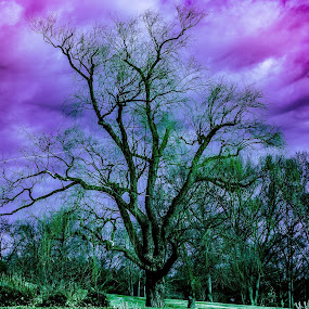 Purple blue sky with a tree by Andrew Medvegy - Landscapes Prairies, Meadows & Fields ( purple blue sky green )