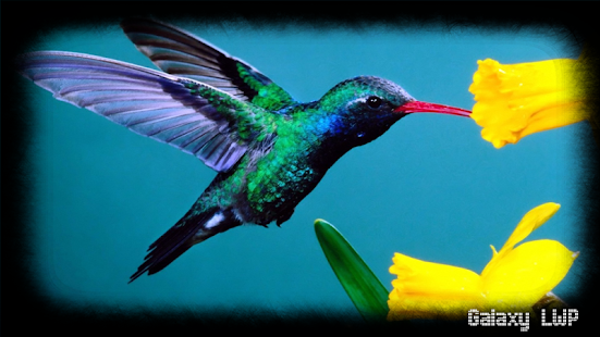 hummingbird pack 2 wallpaper android apps on google play