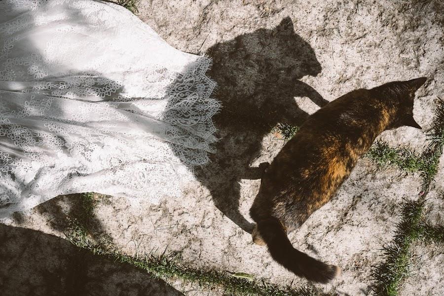 Wedding photographer Barbara Fabbri (fabbri). Photo of 17.05.2019