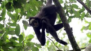Amazon Monkey thumbnail