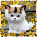 My Pet Cat - Fun & Learn icon