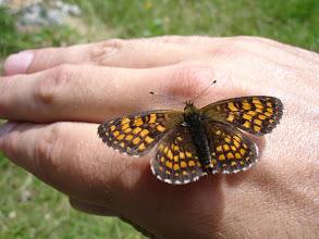Photo: leptirić na mojoj ruci