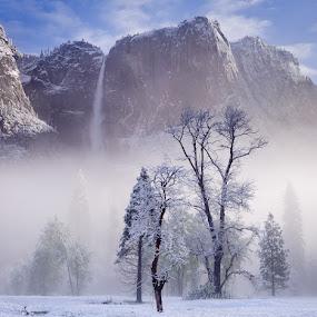 Yosemite Falls by Chris Sargent - Landscapes Mountains & Hills ( dawn, yosemite, snow, yosemite falls, meadow, mist )