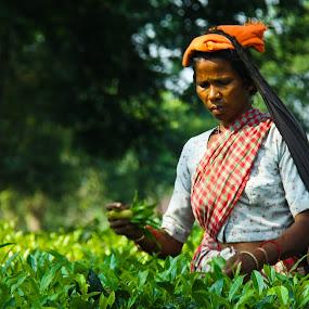 Worker in a tea garden. by Debasish Naskar - Professional People Agricultural Workers